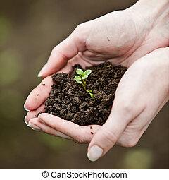 simbolo vita, giovane, mano, ambientale, presa a terra, fresco, nuovo, plant., conservation.