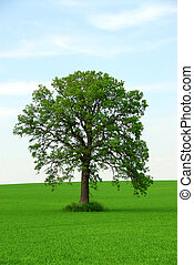singolo, albero
