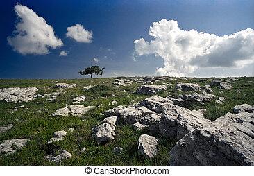 singolo, paesaggio albero