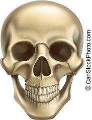 skull., vettore, 3d, realistico, icona