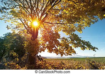 sole, -, albero, autunno, tramonto, alba, luce, paesaggio