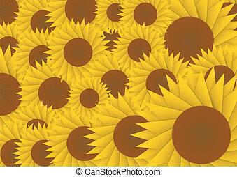 sole, astratto, fiore, fondo