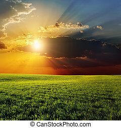 sopra, campo, drammatico, verde, agricolo, tramonto