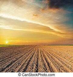 sopra, campo, nero, arancia, tramonto, agricoltura