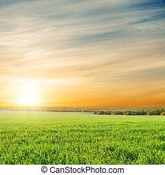 sopra, campo, verde, arancia, tramonto, erba
