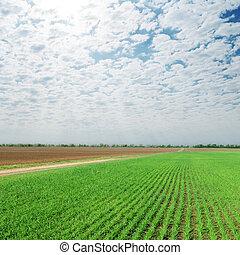sopra, cielo, nuvoloso, campo, verde, agricoltura