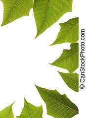 sopra, foglie, fondo, bordo, verde bianco