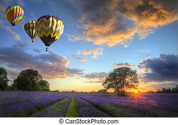 sopra, volare, lavanda, aria, caldo, tramonto, palloni, paesaggio