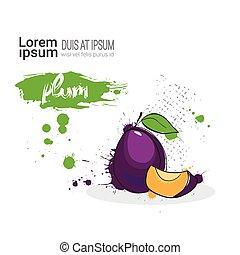 spazio, prugna, mano, acquarello, frutta, fondo, disegnato, bianco, copia