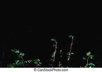 spazio, testo, foglie, pavimento, foresta verde, crescente