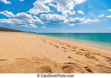 spiaggia, estate, posto, conchiglia, vacanza, mare, azzurro, sfocato, sabbia, vuoto, chiaro, cristallo, text., copia, tuo, space., abbandonato, ideale, dorato, sea., place., viaggio sicuro, concetto, fondo