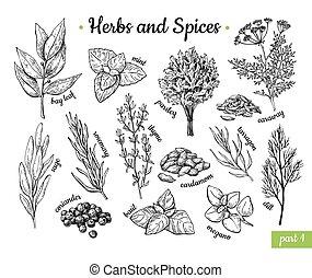 spices., vettore, cibo, condimento, drawing., stile, botanico, mano, erbe, disegnato, vendemmia, set., sketches., inciso, illustrazione, aroma