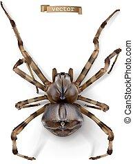 spider., 3d, vettore, realistico, icona