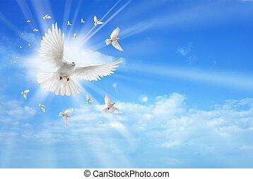 spirito, cielo, santo, colomba, volare