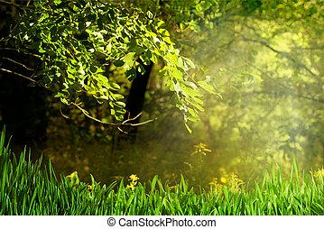 splendere, estate, naturale, sfondi, foresta, giorno