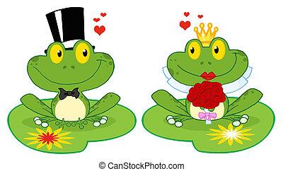 sposo, giglio, rana, blocchi, sposa