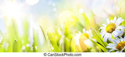 springr, astratto, soleggiato, fondo, arte, fiore