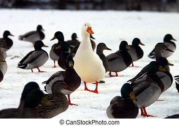 stare in piedi, lei, crowd?, fuori