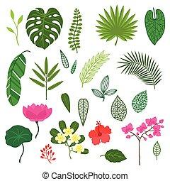 stilizzato, set, foglie, tropicale, flowers., piante