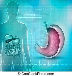 stomaco, normale, fondo, cardiogramma, sezione, croce, anatomia, circondare, fondo, tecnologia, astratto, organi