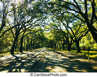 strada, albero ha rivestito, stati uniti, arco, storico, georgia, quercia, piantagione, wormsloe, savana, forma