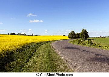 strada, rurale, canola