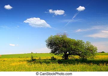 strano, paesaggio albero