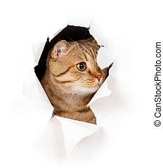 strappato, isolato, gatto, carta, buco, lato