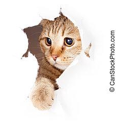 strappato, isolato, gatto, dall'aspetto, carta, buco, lato