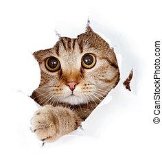 su, strappato, isolato, gatto, dall'aspetto, carta, buco, lato