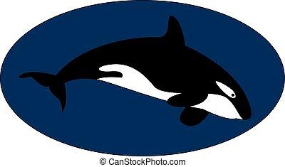subacqueo, illustrazione, assassino, fondo., vettore, balena, bianco