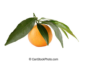 succoso, fondo, fresco, mandarino, bianco