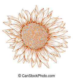 sunflower., vettore