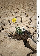 suolo, fesso, fiore, irrigazione, giallo