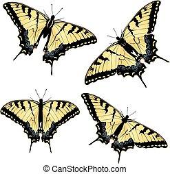 swallowtail, farfalla tigre