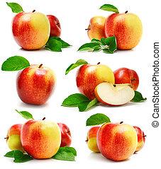 taglio, mela, foglie, set, verde, frutte, rosso