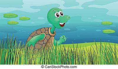 tartaruga, stagno, lungo, correndo