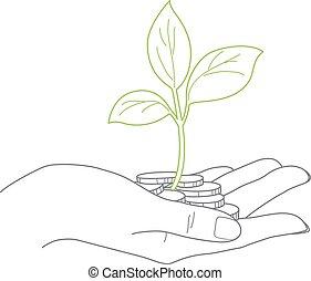 tenere, concetto, femmina, chiudere, monete, investimento, mano, pianta
