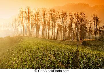 terreno coltivato
