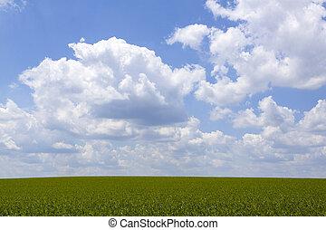 terreno coltivato, fondo