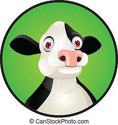 testa, cow's