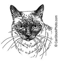testa, illustrazione, gatto, vettore, mano, disegno