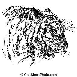 testa, illustrazione, mano, tiger, vettore, disegno
