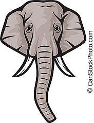 testa, (indian, elephant), elefante