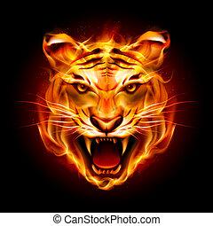 testa tigre, fiamma