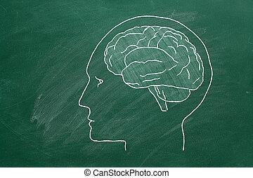testa umana, brain.