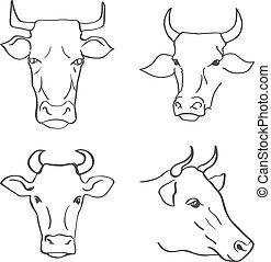teste, mucca, illustrazione, mano, vettore, disegnato