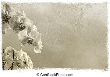 testo, immagine, posto, fondo, textured, floreale, o, orchidee