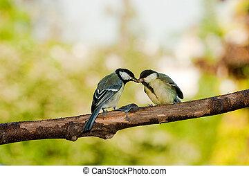 tetta, grande, uccelli alimento
