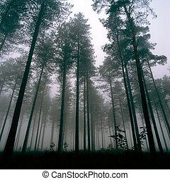 thetford, foresta, albero